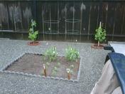 05/02/09 Charlie Started Garden