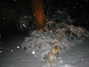 Snow in Nevada City 7DEC 5 am