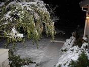 snow dec 09 005.jpg