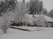 snow 007 (Small).jpg