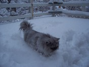 kody the cat loves snow