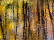 Autumn Reflection/Black River/Kawartha Lakes On