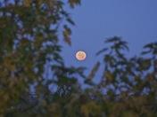 The setting autumn moon