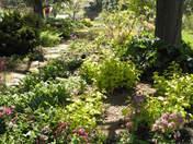 Sue's Spring Garden