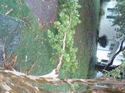 Hunt Ridge neighborhood in Timonium after July 26 storm