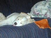 Tosca sleeping