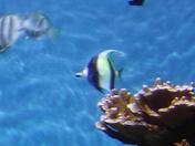 Beautiful fish in Hawaii