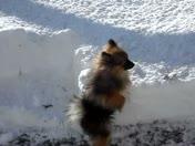Rosie's first big snow storm