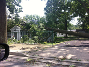 tree on house in Parkville