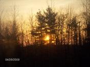 Sun Rise Through the Trees