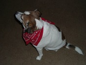 My Beloved Snoopy