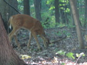Deer in the Milwaukee County Park