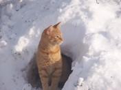 Stinky, Snow Scout