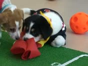 Milwaukee's Own Puppybowl!