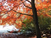 Fall at Governor Dodge
