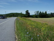 Route 7 in VT