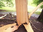 Tree hit by lightning Sunday, Aug. 2 in Mt. Washington