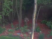 My garden in the shade