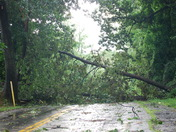 tree down tollgate road south