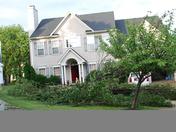 Tree lands on car in Owings Mills
