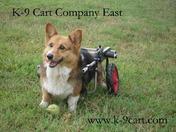 Corgi in K-9Cart.com Dog Wheelchair