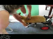 How to Put a K-9Cart.com Dog Wheelchair on