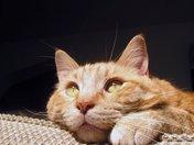 Big eyed naughty cat