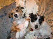 Reese and Gilbert