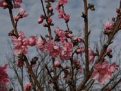Blossoms055.JPG