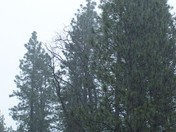 Rain in Grass Valley (Alta Sierra)