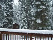 2009.03.03.2 Snow.jpg