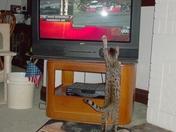 Bengal likes NASCAR