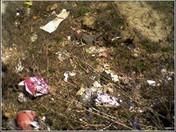More litter !