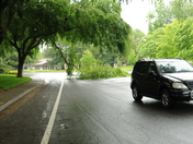 American River ParkWay fallen branch on the road