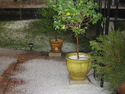 Hailstorm 11-27-2009