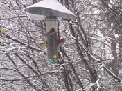 Birds having snow day