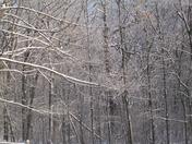 Winter 2009 017.jpg