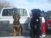 Bodie and Betsy hangin in the back o the truck