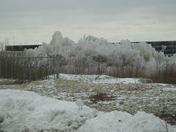 Ice- coated beach grass