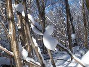 Moosalamoo Snow Snake