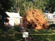 tree smashed into a house