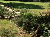 tree fallen in my yard