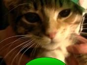 Leperchan Kitty