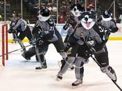 Duffy - Hockey Cat    10/11