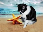 Duffy and starfish  7/12