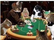 Caturday Night Poker Game