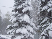 snow storm in may 010.JPG
