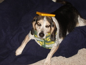 beaglesbabies GO PACK GO!!!