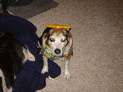 beaglesbabies GO PACK GO!!!!