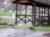 Great weather for ducks part 1